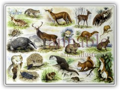 British Wildlife Jigsaw for House of Puzzles