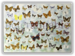 Butterfly Jigsaw for House of Puzzles